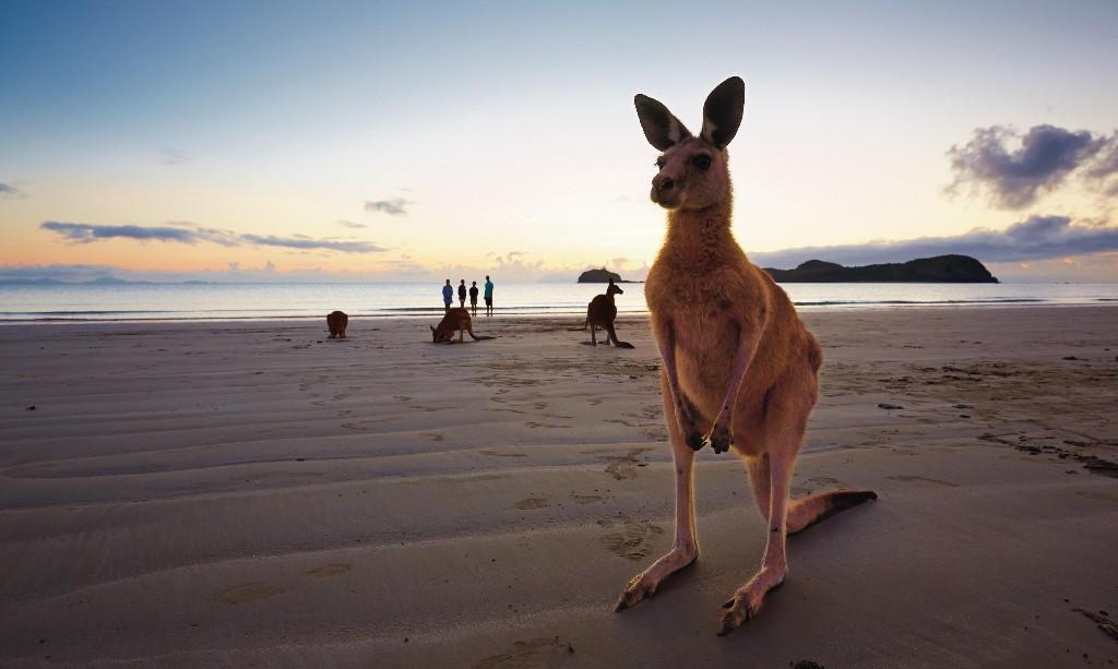 'Super keen': Australia's tourism operators reopen as bookings surge – but doctors urge caution