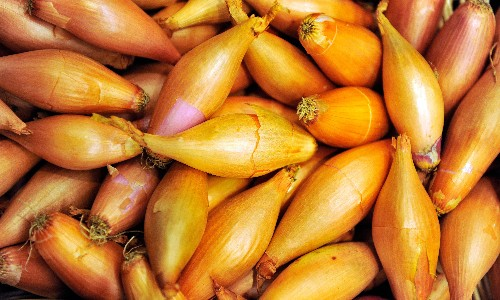 Yin and yang: what's the difference between a shallot and an onion?