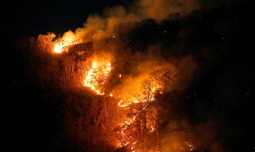 Amazon rainforest fires: global leaders urged to divert Brazil from 'suicide' path
