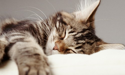 Let's start the year by curling up, cat like, and hibernating…