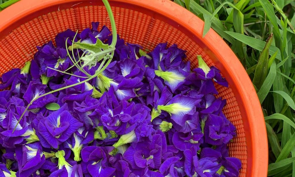 Flower Arranging - cover