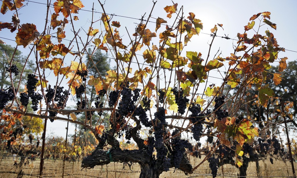 After the wildfires: tourist firms in California's wine country say no one is coming
