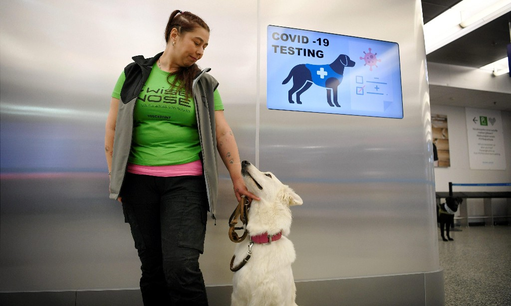 'Close to 100% accuracy': Helsinki airport uses sniffer dogs to detect Covid