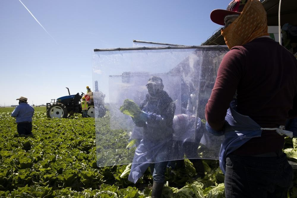 'The sun is hot and you can't breathe in a mask' - life as an undocumented farmworker