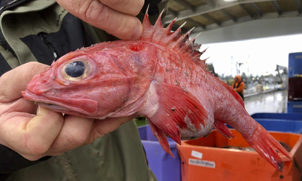 Trawlers return to Pacific fishing area in rare environmental success story