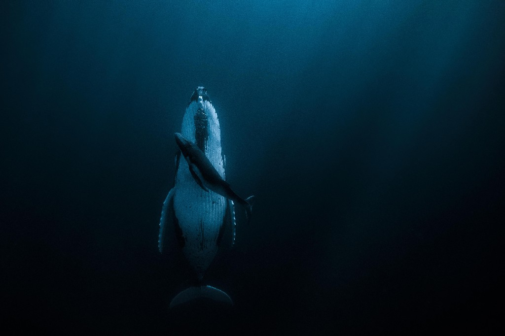 The $172,140 photo: Australian photographer's picture of whale and calf wins Hipa prize