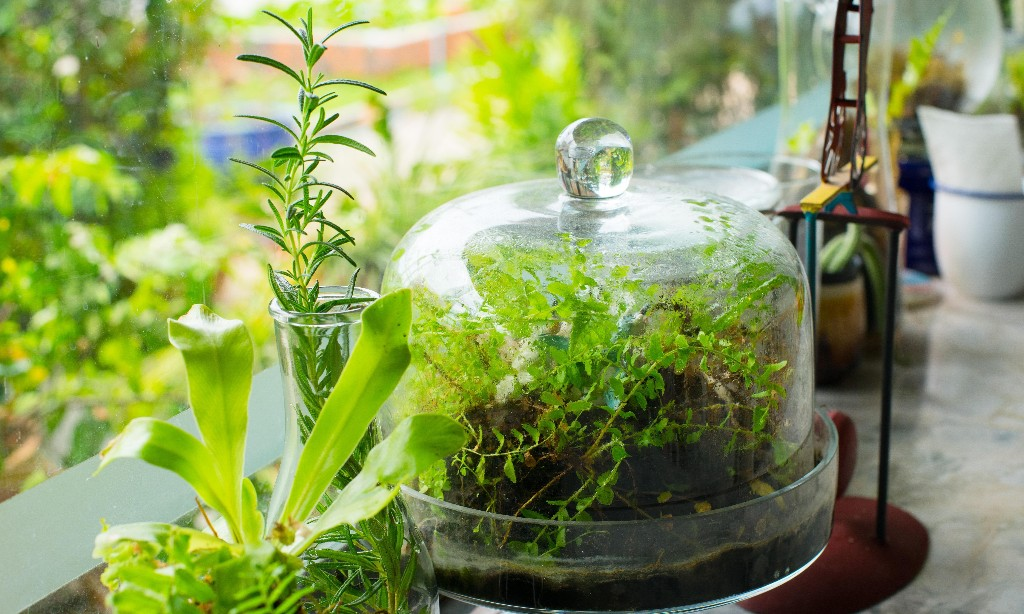 Growing plants inside – the easy way