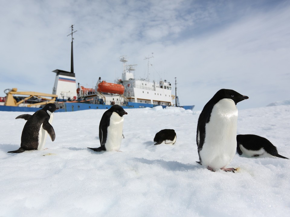 Rescued scientists bring back a warning from the Antarctic