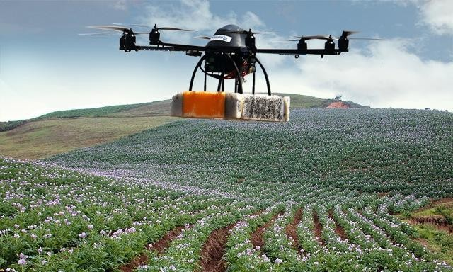 How drones can detect crop problems early to keep farmers on track