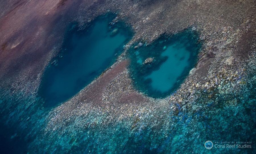Great Barrier Reef: 93% of reefs hit by coral bleaching