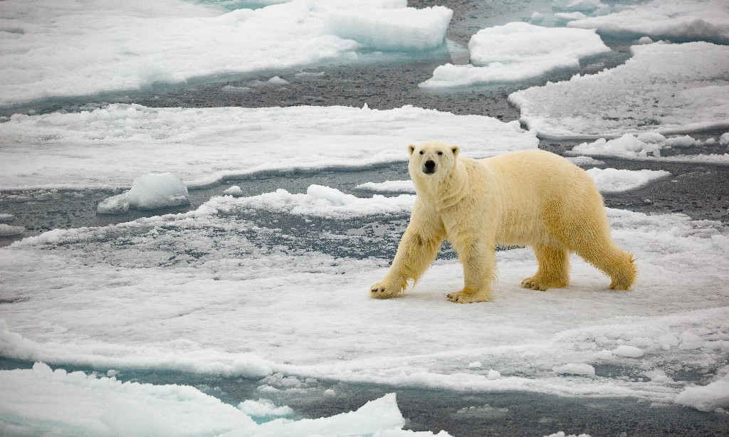 Global temperatures likely to hit at least 1C warming for next five years