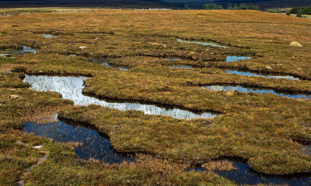 Why the UK needs a full peat compost ban