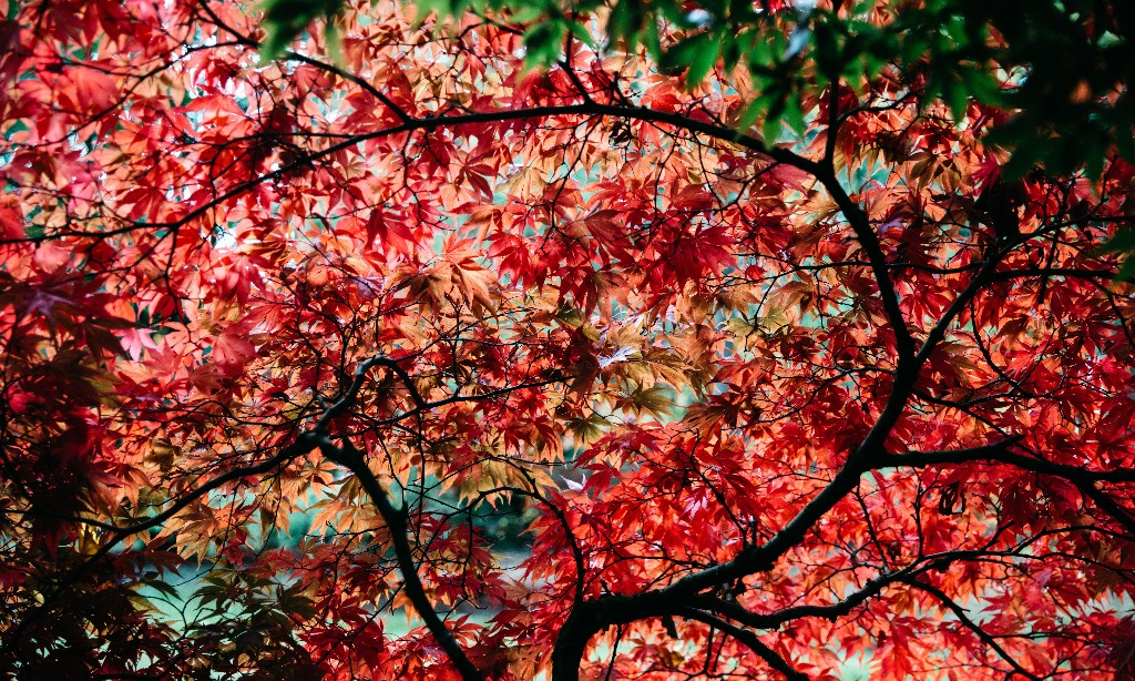 The meaning of leaf: an autumnal tour of England's arboretums
