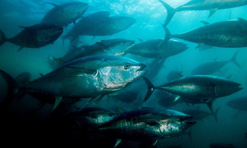 Oceans losing oxygen at unprecedented rate, experts warn