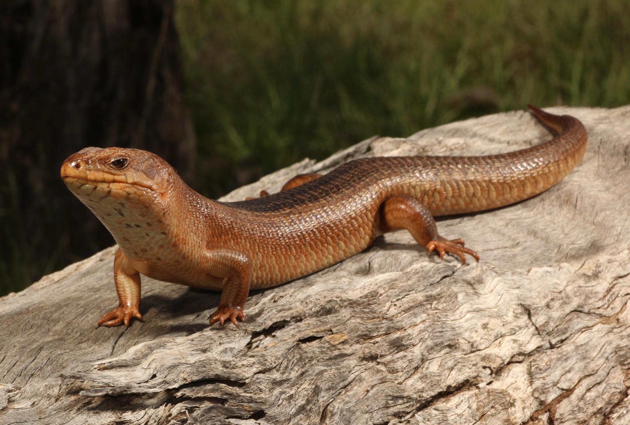 'A national disgrace': Australia's extinction crisis is unfolding in plain sight