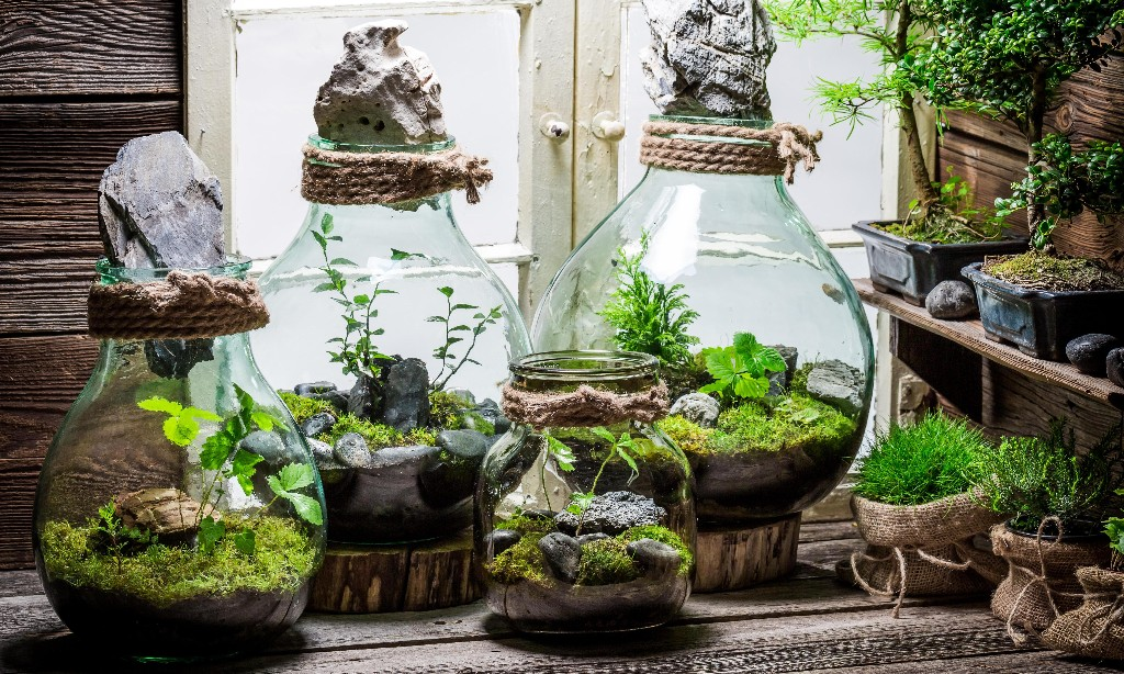 How to treat your terrarium  - Magazine cover