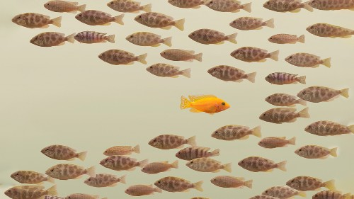 Leading Change in a Company That's Historically Bad At It