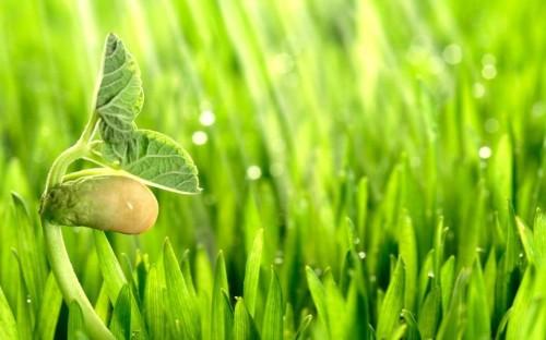 Чувствуют ли растения боль?   Hi-News.ru