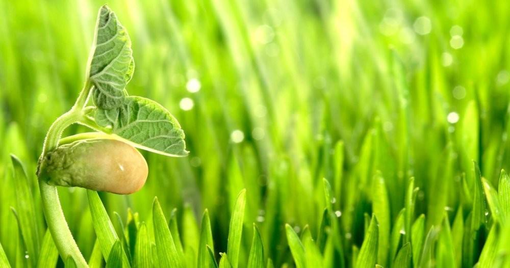 Чувствуют ли растения боль? - Hi-News.ru