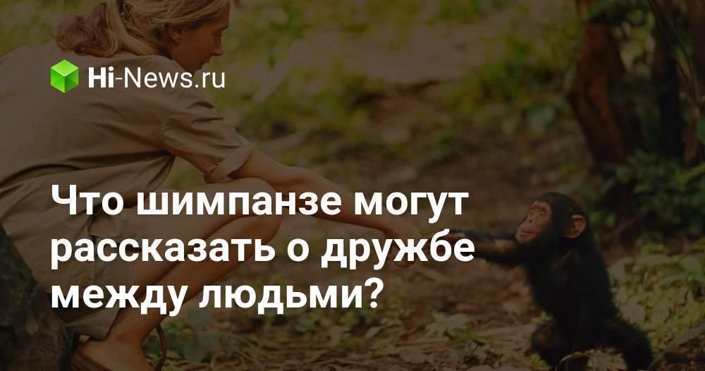 Что шимпанзе могут рассказать о дружбе между людьми? - Hi-News.ru