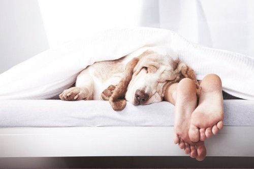 The 10 Commandments Of A Good Night's Sleep