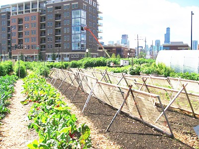 How Urban Agriculture Is Revitalizing Local Economies