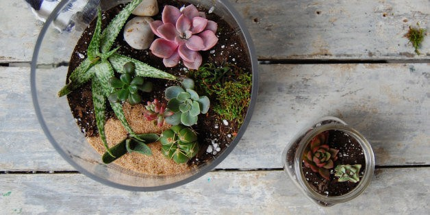 How to Make a Terrarium (and Keep It Alive) | HuffPost Life