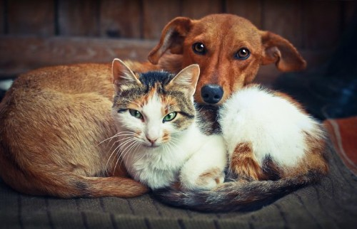 Who Loves Their Humans More -- Cats Or Dogs? Here's The Answer