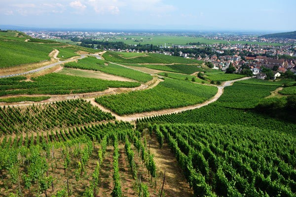 The Route du Vin in Alsace