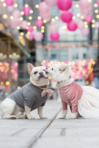 Two Pups Took Engagement Pics And The Cuteness Is Off The Charts