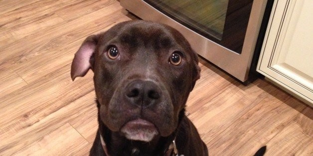 This Landlord Will ONLY Rent To People With Big Dogs (Especially Pit Bulls) | HuffPost Life