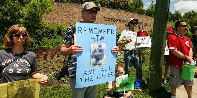 Our Mistake Ended In Tragedy: Empathy To The Cincinnati Zoo Mother