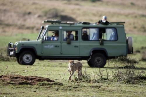 Forgetting the Supreme Court:  A Safari Through Kenya | HuffPost Life