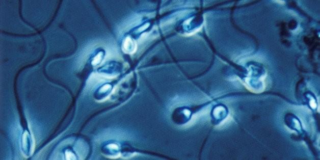 Handsome Men Have Poorer Sperm Quality, New Study Shows