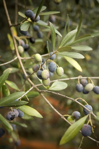 What's The Difference Between Green And Black Olives, Anyway? | HuffPost Life
