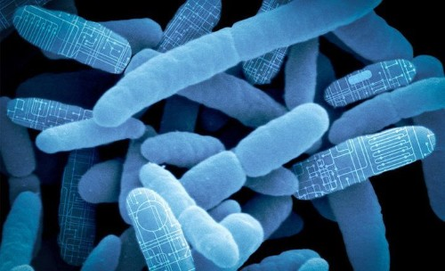 Hacking Gut Bacteria Could Be The Future Of Medicine
