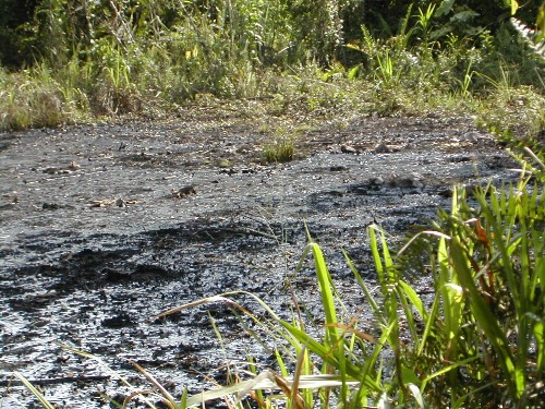 How Chevron's Scientists Misled Courts and Public About Death and Disease in Ecuador
