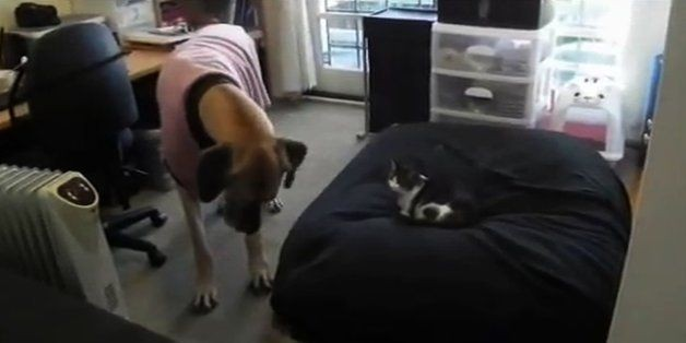 13 Dogs Who Are Going To Stand Up To Cats... Tomorrow
