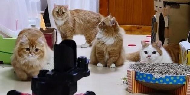 Cats Vs. Robots: Cutest War Ever (VIDEO)