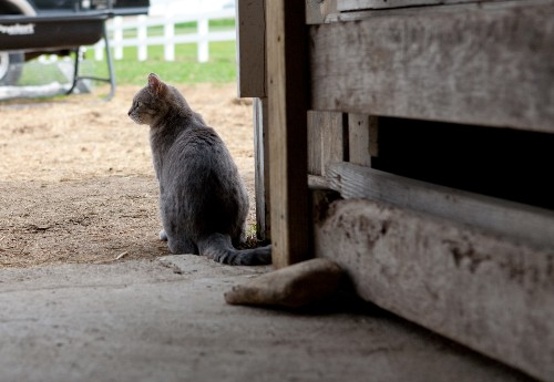 Barn Cat Placement Program: A Simple Shelter Solution