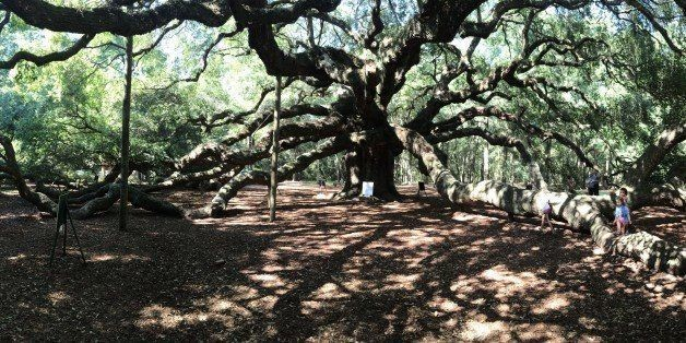 If You Want To Feel Very Small, Visit This Spot In Charleston | HuffPost Life