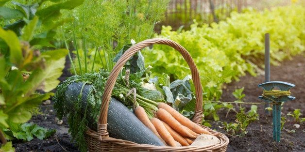 This Genius Cheat Sheet For Gardeners Tells Where And When To Plant Your Vegetables | HuffPost Life