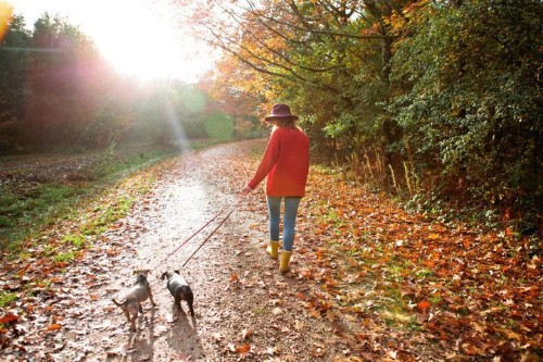 You're One Short Walk Away From A Better Mood | HuffPost Life