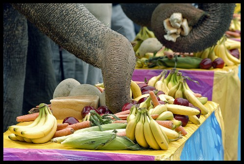 Feeding the Elephant: How to Maintain Your Motivation to Give