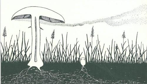 Mushrooms May Really Be Magic After All