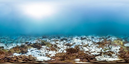 From Healthy To Dead: How Coral Bleaching Is Devastating Our Oceans