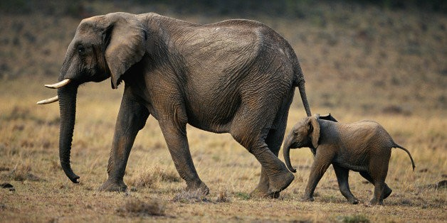 5 Reasons to Visit Africa With Your Teenager This Summer | HuffPost Life