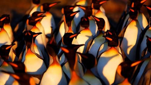 Seven Spectacular Wildlife Phenomenons to Experience