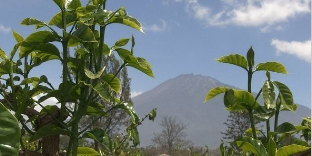 Coffee Quest: Discovering the Secret to Growing the World's Best Coffee   HuffPost Life