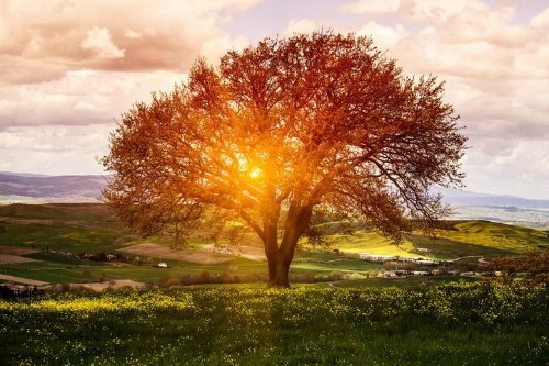 Daily Meditation: Oneness
